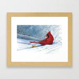 Cardinal in First Light Framed Art Print