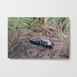 Charlene The Alligator Metal Print