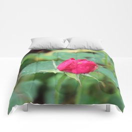 Little Green Bug on a Pink Rose Comforters