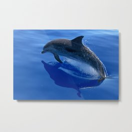 Splashing dolphin fish swimming in deep blue ocean Metal Print