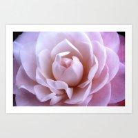 Pink Camellia Cultivar. Art Print