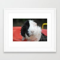 guinea pig Framed Art Prints featuring Guinea Pig by MelissaLaDouxPhoto