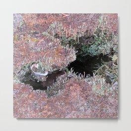 Mousse et lichen Metal Print