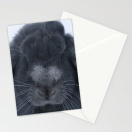Winter Nose Stationery Cards