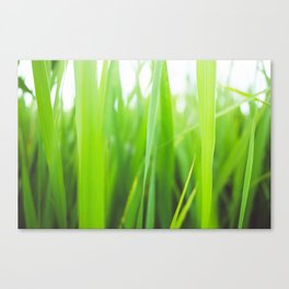 Summer is green Canvas Print