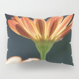 Osteospermum named Sunadora Palermo Pillow Sham