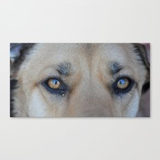 Cooper's Eyes (For Devices) Canvas Print