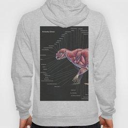 Arctodus Simus Muscle Anatomy Hoody