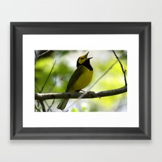 Hooded Warbler Framed Art Print