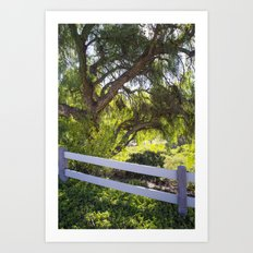 A Tree Next To A White Fence Art Print