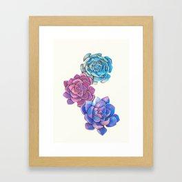 Vibrant Succulents  Framed Art Print