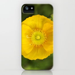 Iceland Poppy Bloom iPhone Case