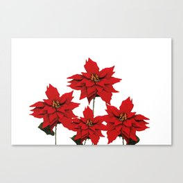 Red Poinsettia flower Canvas Print
