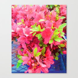 Sweet Fuchsia   Canvas Print