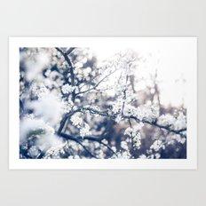 Cherry Blossom ❁ Art Print