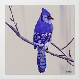 Blue Jay Bird Canvas Print