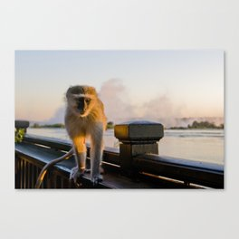 Curios monkey Canvas Print