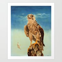 Prairie Falcon  Art Print