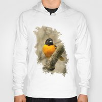 baltimore Hoodies featuring Baltimore Oriole Watercolor Painting by Christina Rollo