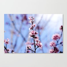 Signs of Spring 1 Canvas Print
