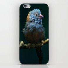 Cordon Bleu Canary iPhone & iPod Skin
