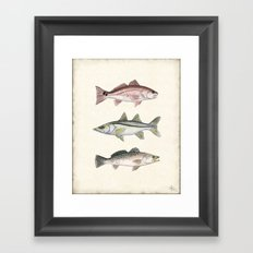 Inshore Slam! ~ Redfish, Snook, and Trout Watercolor Illustration by Amber Marine Framed Art Print