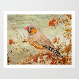 Zebra Finch Among Almond Trees Art Print