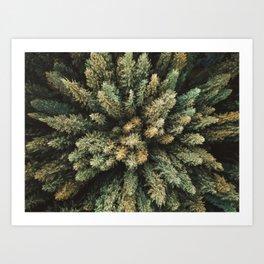 pine tree aerial view Art Print