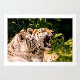 Sleepy Tigers Art Print