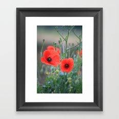 Poppies Framed Art Print