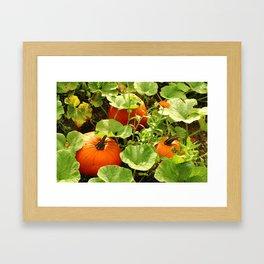 Harvest Seasion Framed Art Print