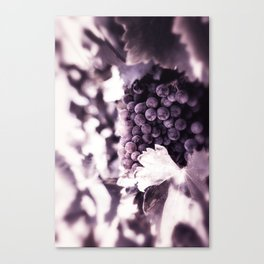 Grapes into Wine Canvas Print