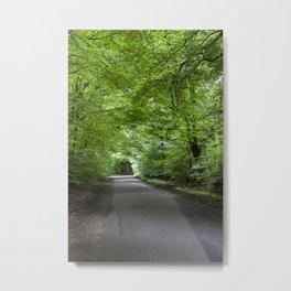 Summer Beech Canopy 1 Metal Print
