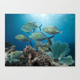 Bluefin Trevally Canvas Print