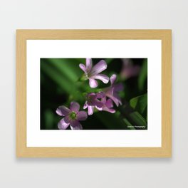Purple on Green Framed Art Print