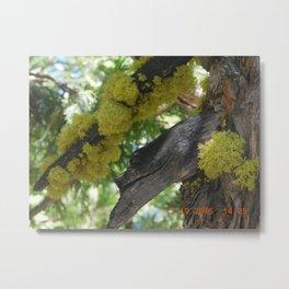 road trip, tree, moss Metal Print