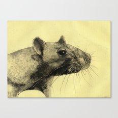 Rat 3 Canvas Print