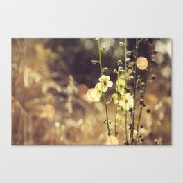 Summer Fields | 02 Canvas Print