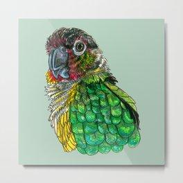 Green Cheeked Conure Metal Print