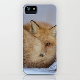 Cute Little Fox Curled Up Winter Photo iPhone Case