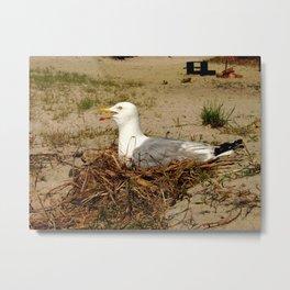 Assateague Seagull On Nest Metal Print