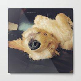 A Dog's Life Metal Print