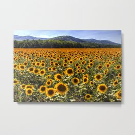 Sunflower Fields Of Dreams Metal Print