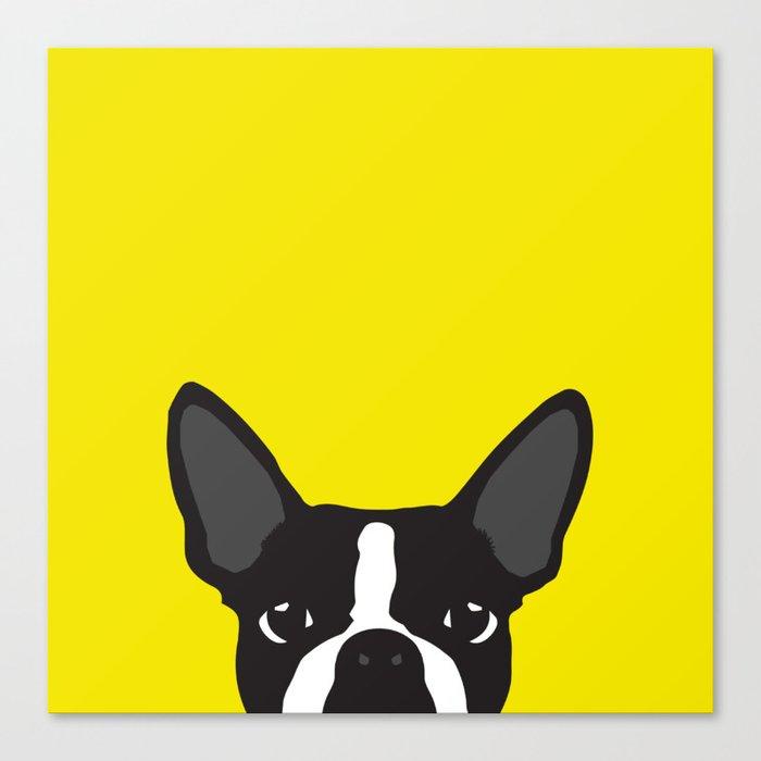 Boston Terrier Yellow Canvas Print