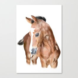 Foal horse baby animal Canvas Print