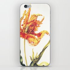 V. Vintage Flowers Botanical Print by Anna Maria Sibylla Merian - Parrot Tulip iPhone & iPod Skin