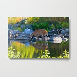 Deer Reflections Metal Print