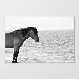 Assateague Pony Canvas Print
