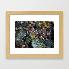 Invasive Framed Art Print