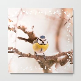Blue tit on a branch #decor #buyart #society6 Metal Print